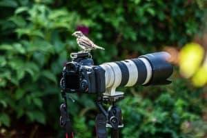 TELEPHOTO-BIRDS