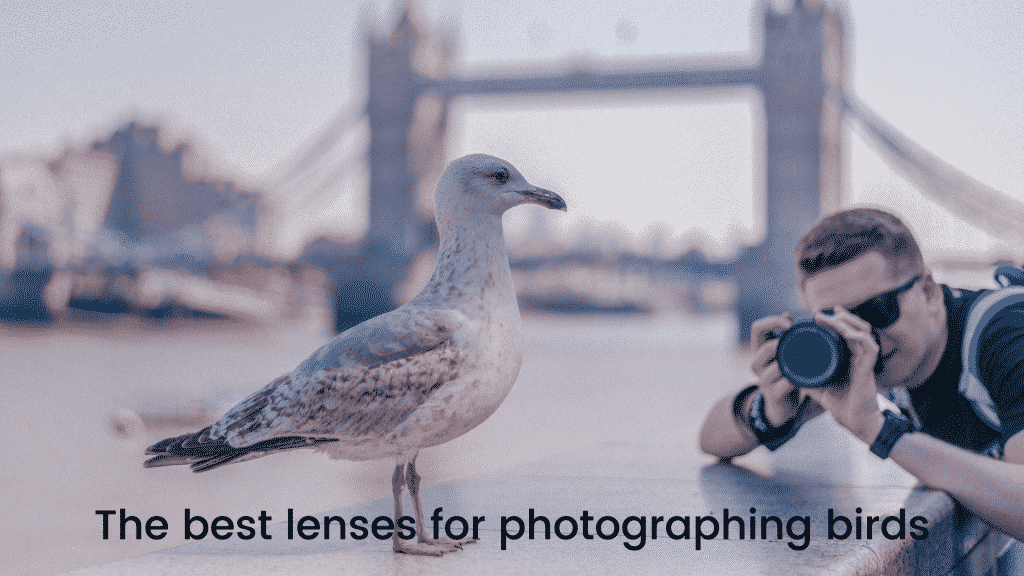 The best lenses for photographing birds